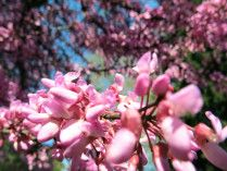 Blossoms in Fenerbahçe Parkı