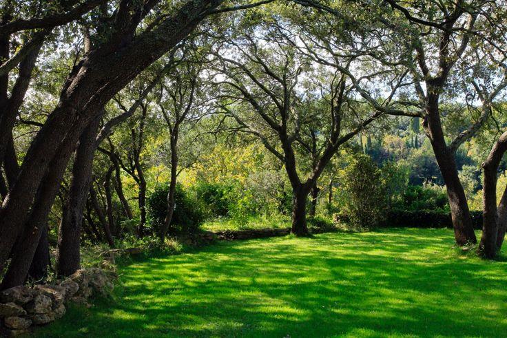 Jardin minimaliste avec piscine et terrasse en Provence, conçu par les paysagistes ConceptuELLES