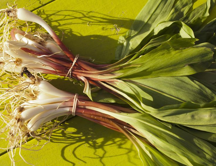 Ramps--More pungent than a scallion and more precise in flavor than garlic—but reminiscent of both—the ramp is the market's emerald harbinger of...