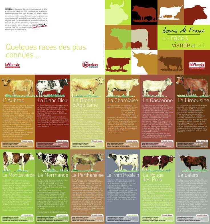 la-viande.fr : Races bovines/vaches de France : bovins laitiers et à viande (allaitantes)