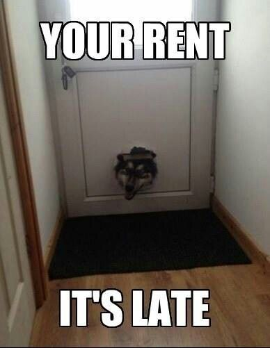 34 best Property Management Funnies images on Pinterest Property - rent roll form