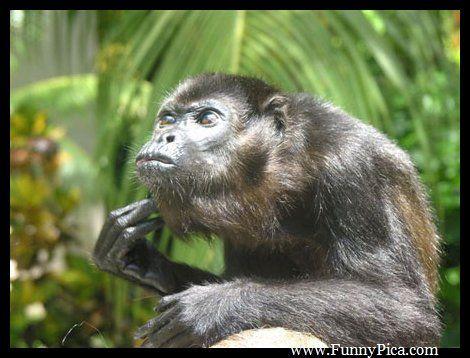 The 25+ best Funny monkey pics ideas on Pinterest | Cute ...