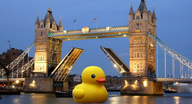 Mr Duck on The River Thames