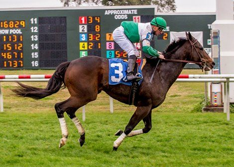 Multiple graded stakes winner Avanzare returned from a 22-month layoff to win his first start in the claiming ranks by four lengths sprinting on the Fair Grounds Race Course & Slots turf course.