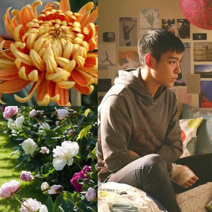 BirthFlower&KPOP // Chrysanthemums & Peonies // TOP of BigBang