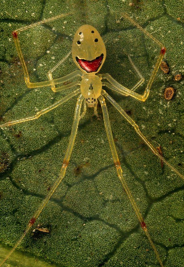 La araña feliz |#Animales