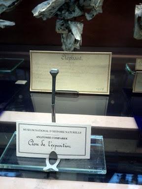 Ceci est le clou de l'exposition - Galeries de Paléontologie et Anatomie comparée - Jardin des Plantes #Paris -  http://www.mnhn.fr/le-museum/ - 2012 - Photo Martine Le Jossec