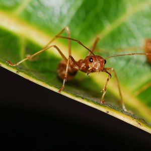 Get Rid of Fire Ants in Two Steps | Garden Club