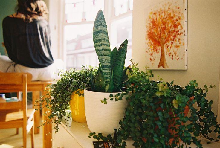 Plantjes thuis <3