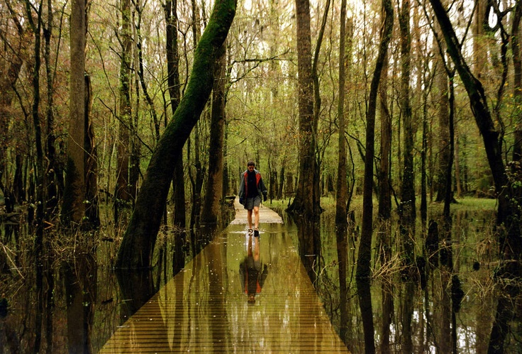 Congaree National Park, South Carolina.  Contains the largest portion of old-growth floodplain forest left in North America.  Contains someof the tallest trees in the Eastern U.S.  #Congaree #national #park