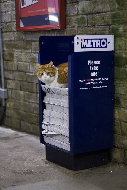 I'll guard them, they are not going anywhere, I assure you! [Metrocat, Todmorden Station]