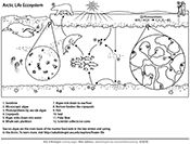 Ask A Biologist, Coloring Page, Arctic Ecosystem