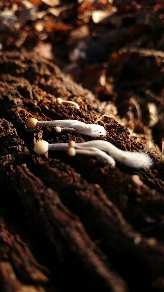 Pocsikphoto mini mushrooms