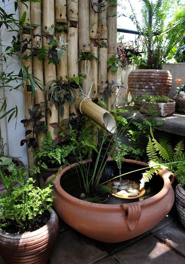 Best 25 mini pond ideas on pinterest pond ideas for Mini pond con pesci