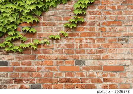 蔦が絡まるレンガ壁