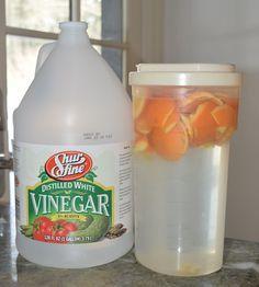 Désinfectant naturel pour le poulailler à base de vinaigre blanc et zeste d'orange ou de citron.