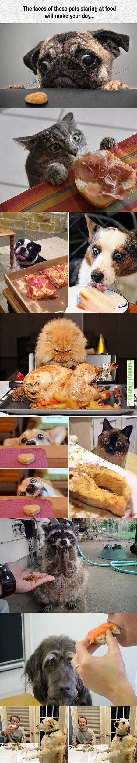 Haha that cat is so angry at the turkey!