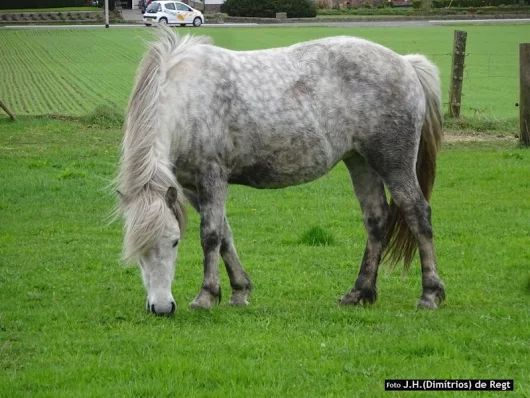 peerd en wagen = paard en auto