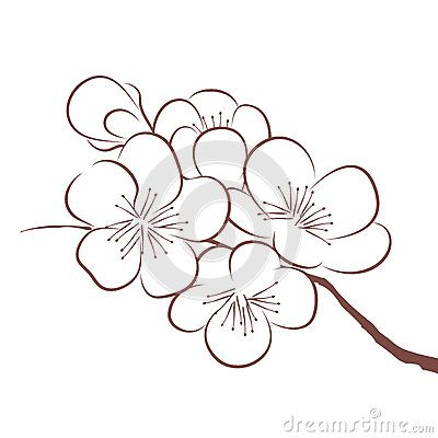 Sakura outline drawing google search cer mica for How to draw a cherry blossom step by step
