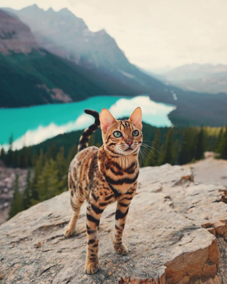 Meet Suki, The Adventure Wondercat Who Became an Instagram Star #inspiration #photography
