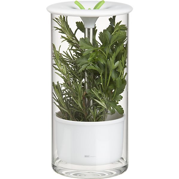 Glass Herb Keeper... Genius!