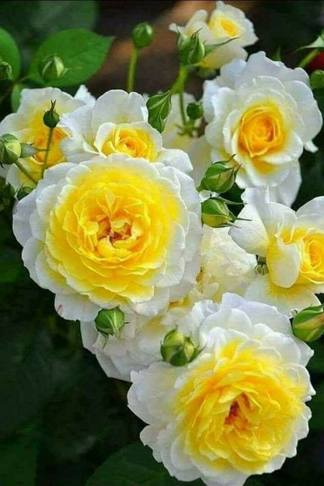 Pin On Yellow Flowers Names