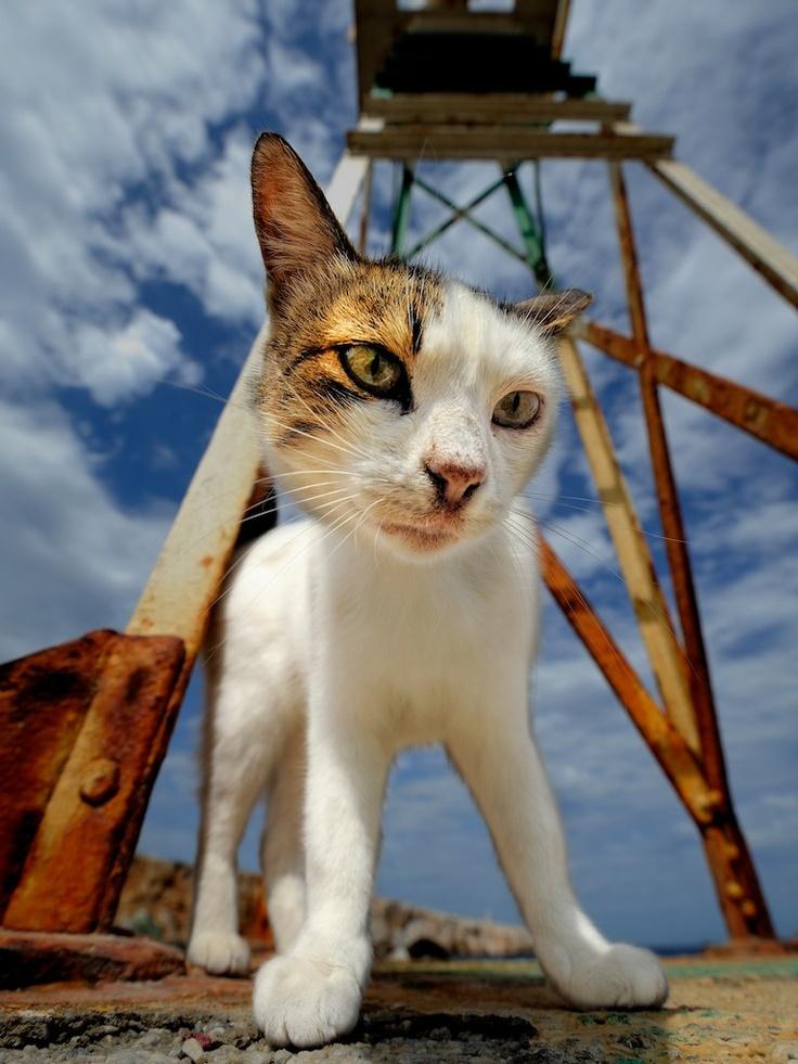 Cat, Folégandros