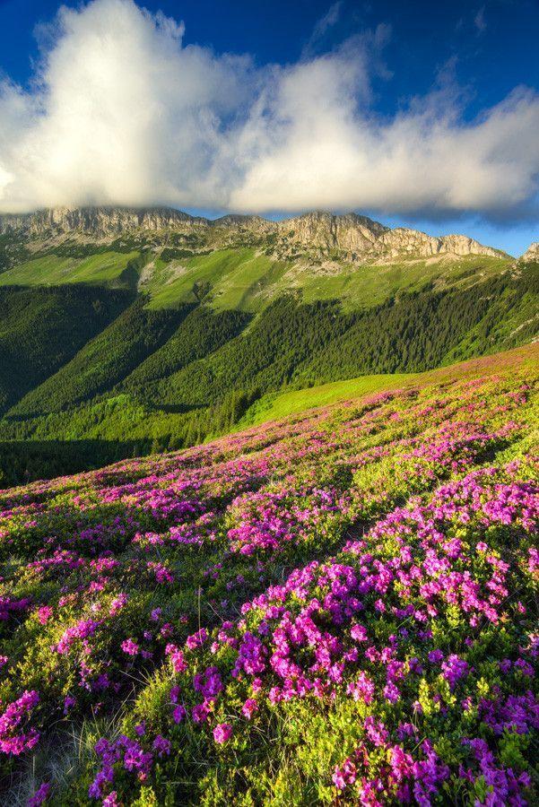 Bucegi Mountains part of the Carpathians,  Romania.