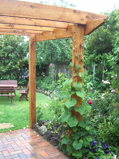 Rustic timber pergola constructed with cypress pine. There are climbing plants beginning their ascent.