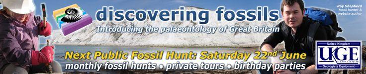 DISCOVERING FOSSILS | Herne Bay (Kent)