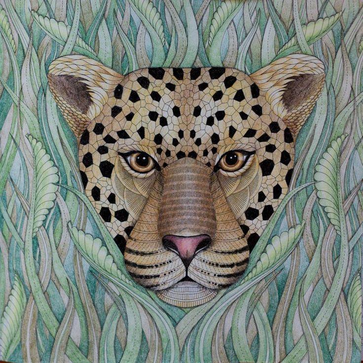227 Best Tropical Wonderland Colouring Book Images On Pinterest