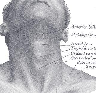 Under chin anatomy