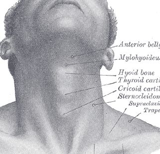 bent elbow forearm muscle diagram under chin muscle diagram 17 best images about clay i expressive heads on pinterest ... #5