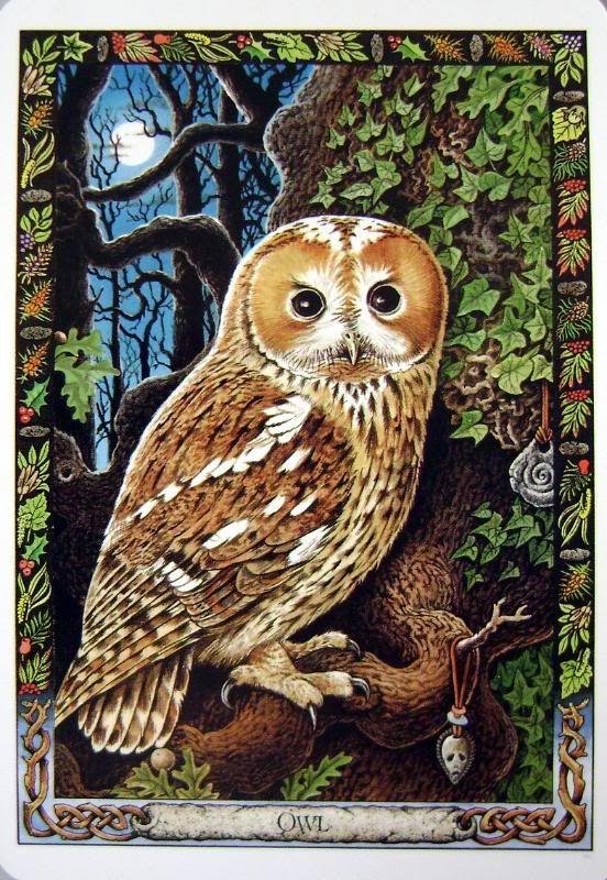 Druid Animal Oracle Produced By Stephanie Carr-Gomm