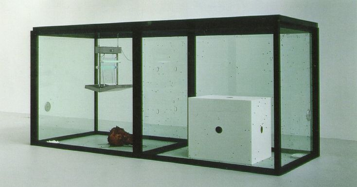 A Thousand Years by Damien Hirst A Thousand Years is a large glass box in which real maggots hatch into flies that appear to feed on blood (actually red sugar water) from a severed cow's head, then are killed by an electric bug zapper — the tragic cycle of life and death played as low farce by the lowest orders.