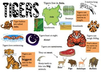 I used this tiger information placemat to support my lower readers when sourcing information for a report on tigers. It's really handy if you can't get your hands on low texts.