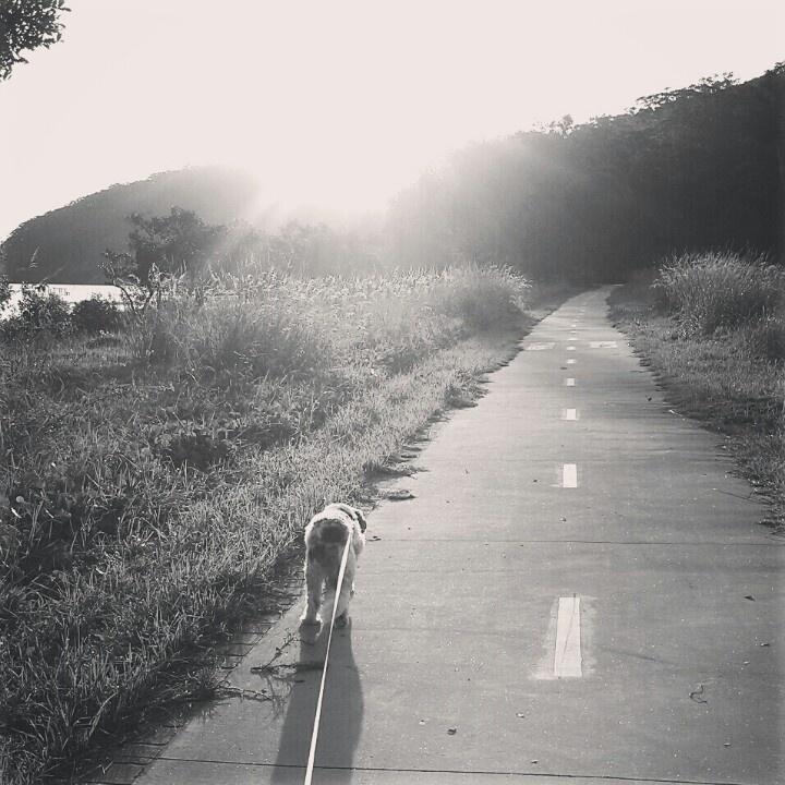 Afternoon walks