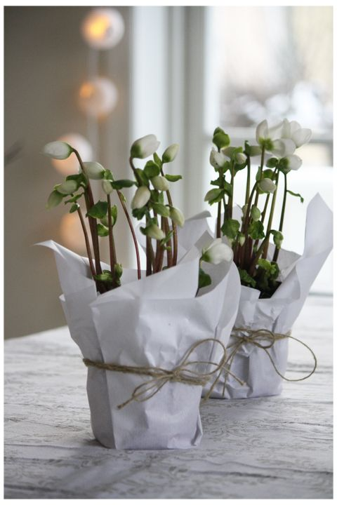 Simple white paper around flowers in Christmas style