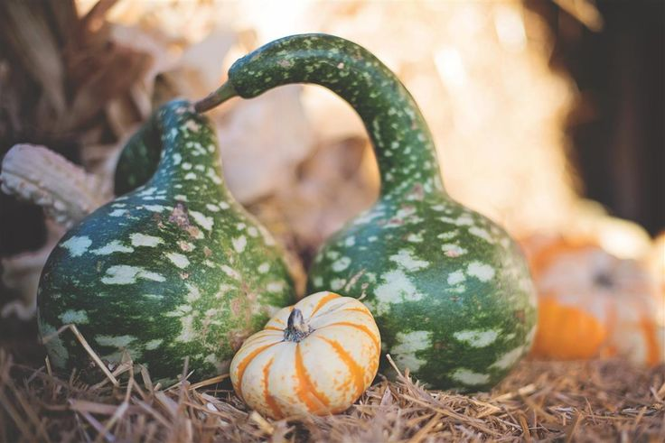 Pumpkins and gourds are showing up in grocery stores, which means autumn is right around the corner. Start daydreaming about enjoying outdoor family fun in cooler temps with...