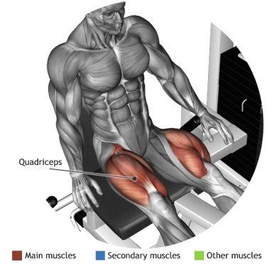 QUADRICEPS -  LEG EXTENSION