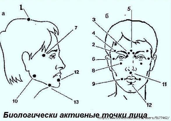 Биологически активные точки на голове — ваша скорая помощь! Японски | Здоровье и Красота | Постила