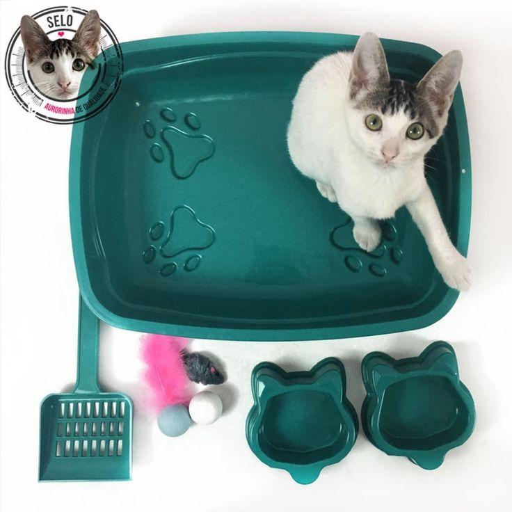 """Um kit ideal para quem está adotando um gatinho e precisa dos itens mais """"básicos"""" para o bem estar do bichano. A caixa de areia é do tamanho Ideal para gatos filhotes, porém, também pode ser usada para gatos adultos acostumados com caixas pequenas. Verifique o tamanho da caixa antes da compra: 41x32x9cm  Kit contendo: 1 bandeja sanitária pequena (41x32x9cm) (plástico) 1 pázinha (plástico) 2 comedouros (plástico) 1 kit com 3 brinquedos (cores aleatórias) *Não acompanha a gatinha fof..."""