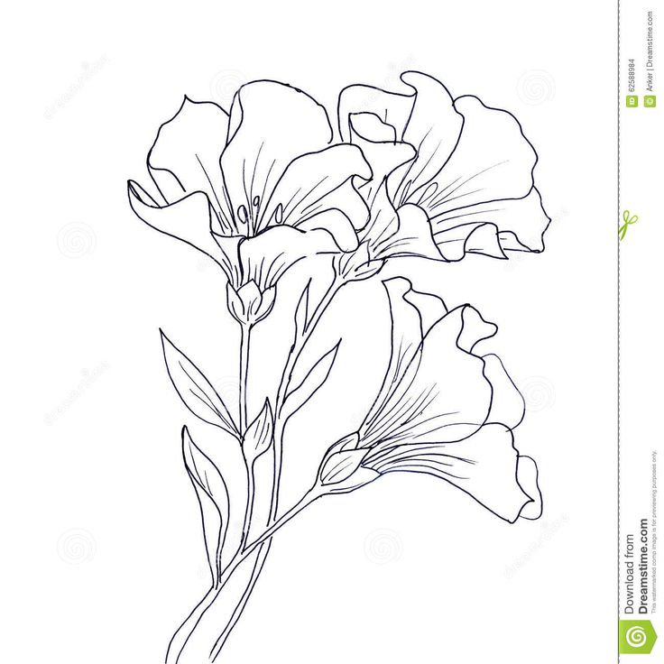 Flower Line Drawing Icon : Best images about Цветы шаблоны отрисовки on