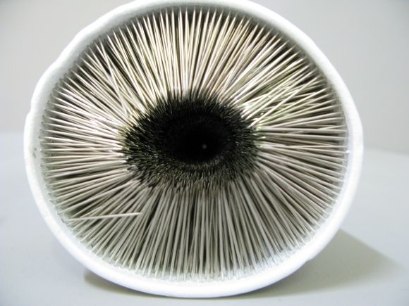Clare Tandy -not a mushroom Polystyrene cup and household ...