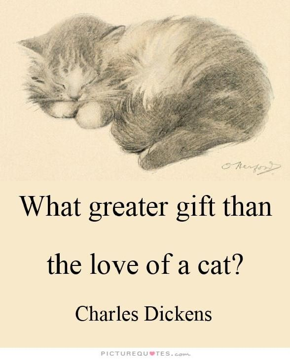 """ Quel plus grand cadeau que l'amour d'un chat? """