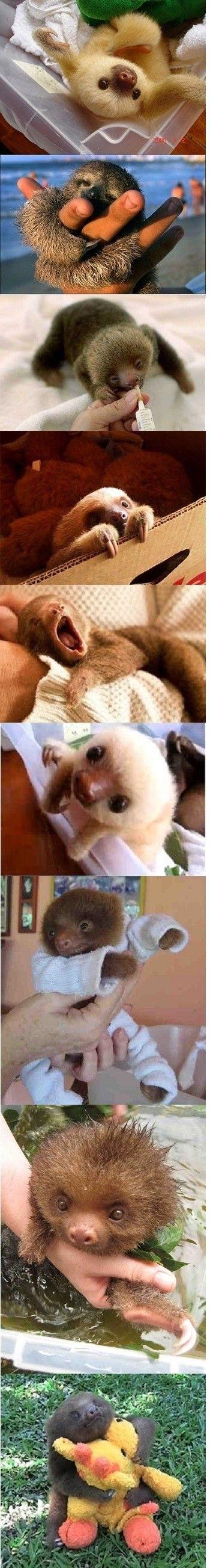 Baby sloths!