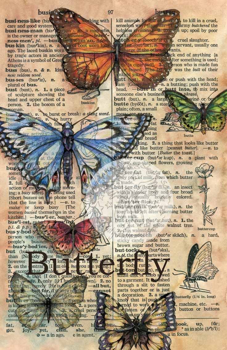 """""""Butterfly"""" 12"""" x 18"""" Mixed Media Drawing on Parchment - Flying Shoes Art Studio"""