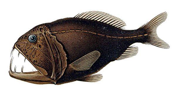 10 самых страшных рыб