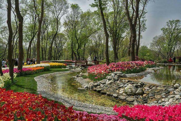 Стамбул город Тюльпанов  Фестиваль Тюльпанов в Стамбуле. Индивидуальные экскурсии по Стамбулу  www.russkiygidvstambule.com  Info@russkiygidvstambule.com