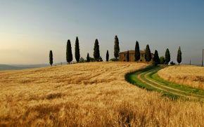 paesaggi, natura, campo, campo, Italia, traino, grano, autunno, albero, alberi, casa, cielo